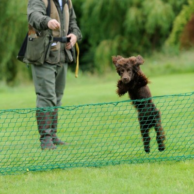 Early on in the gundog training class